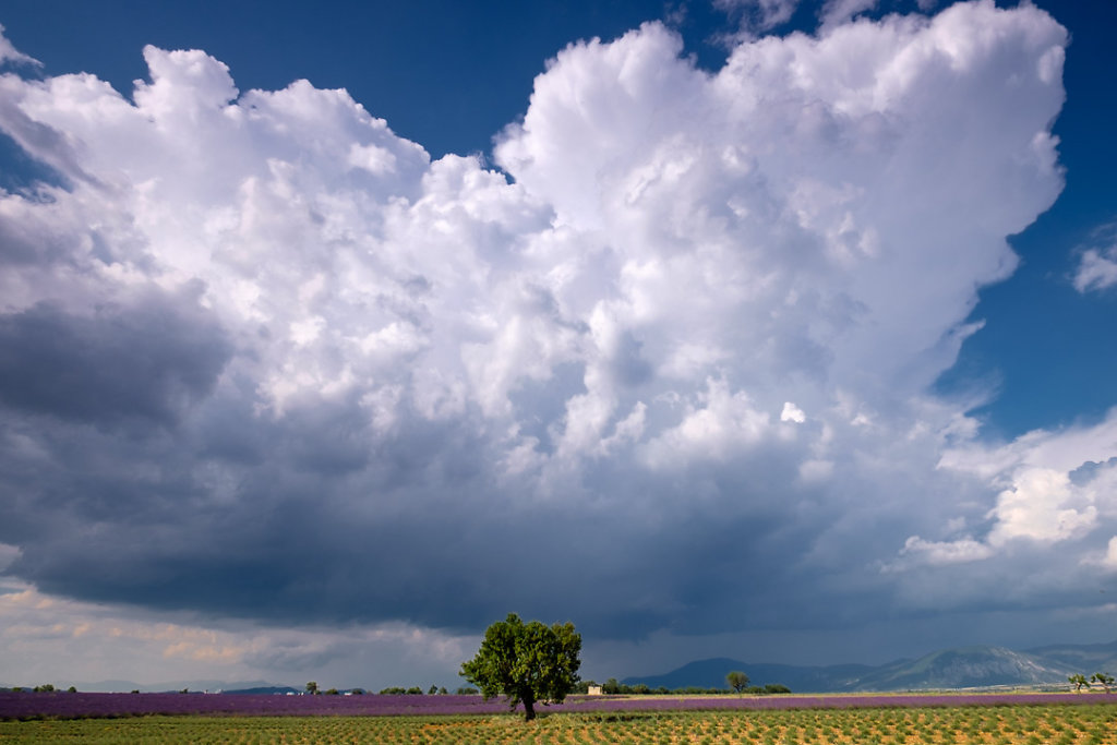 Afternoon thunder clouds on the Valensole Plateau, Provence